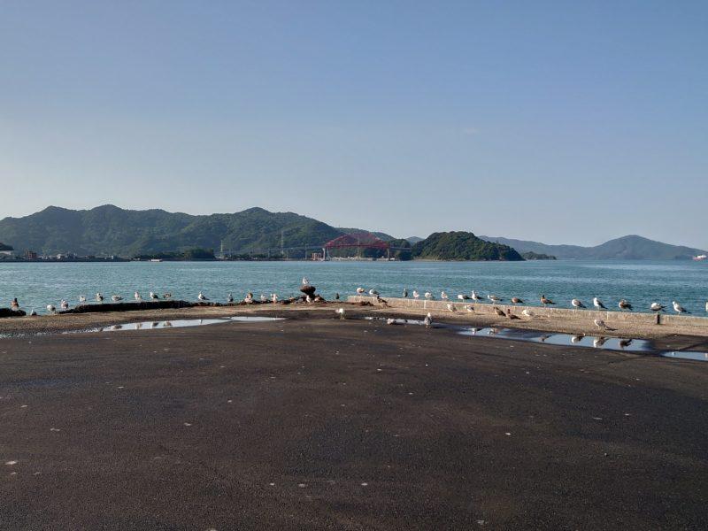 台風一過の長閑な風景サムネイル